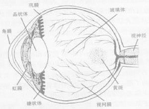 眼酸鹼化學傷