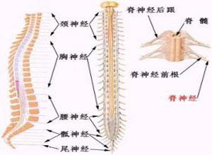電擊傷所致脊髓病