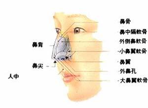 鼻前庭囊腫